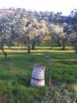 basket-grove