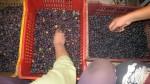 baskets-olives